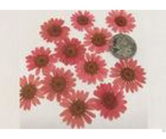 Mirror Decoration Dried Pressed Flowers Material For Diy Handicrafts