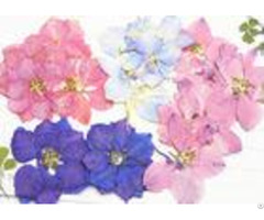 Colorful Larkspur Epoxy Diy Pressed Flowers For Wedding Fowers Pictures
