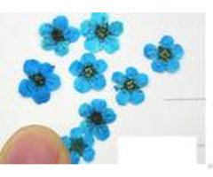 Aroma Wax Tablets Pressed Flower Gifts Diameter 0 6cm For Home Decoration