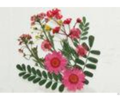 Colorful Framed Pressed Flowers Arrangement Daisy Leaves Fern For Diy Decoration