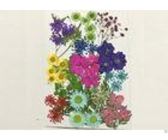 Vacuum Bag Pressed Flower Gifts Colorful Leaves Daisy Larkspur For Decorative Candle