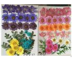 Raw Material Colorful Diy Pressed Flowers Plant Specimens For Kindergarten