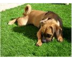 Green Landscaping Pet Friendly Artificial Grass Lead Free Pp Fibrillated Yarn 10mm