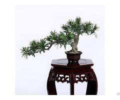 Faux Buddhist Pine Tree