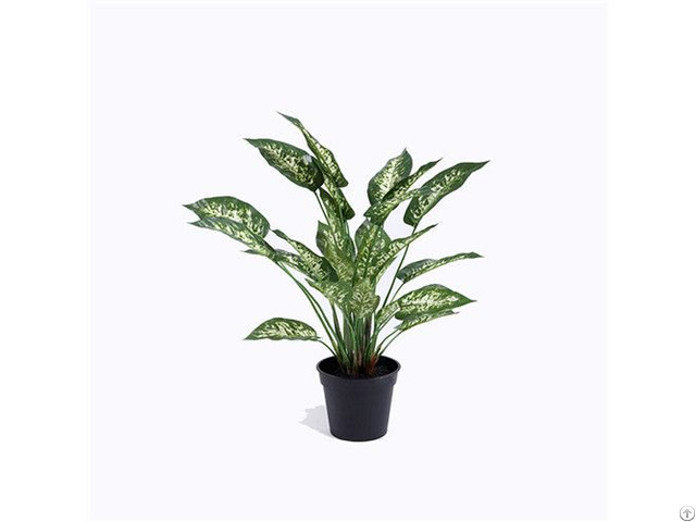 Artificial Dumb Cane