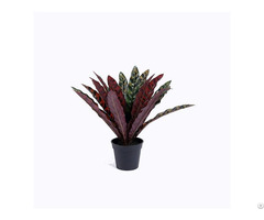 Artificial Silk Rattlesnake Plant