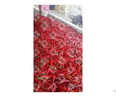 Fresh Hot Chili