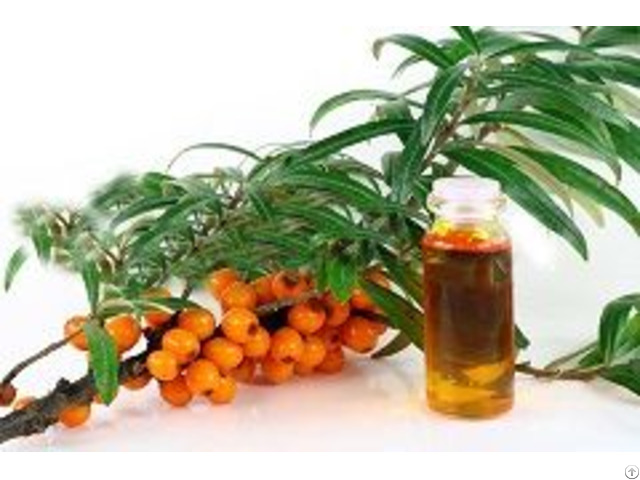 Seabuckthorn Seed Oil Form And Herbal Extract Type