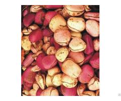 Kola Nut Cola Acuminata