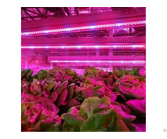 Full Spectrum T8 T5 Plant Led Grow Light Tube