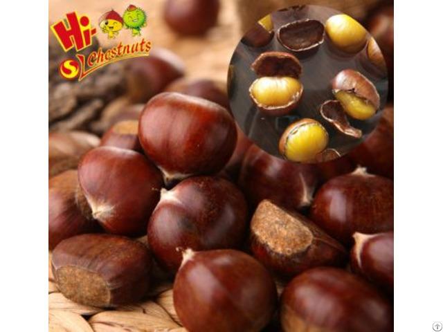 Organic Fresh Chestnuts