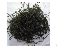 High Swelling Ratio Machine Dried Cut Kelp