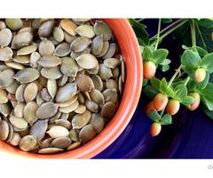 Pumkin Seed