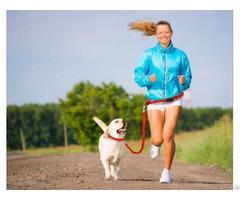 Muiltfunction Pet Dog Waistline Walking Rope Sets