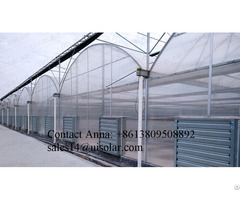 Good Quality Tomato Strawberry Lettuce Hydroponic Plastic Film Greenhouse
