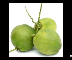 Fresh Coconut Viet Nam