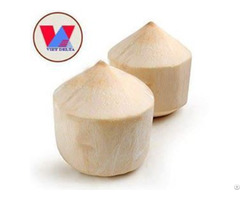 Fresh Young Coconut Viet Nam