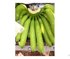 Vietnam Fresh Green Cavendish Bananas