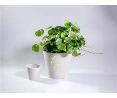 Enviroarc Biodegradable Plastic Flower Pots
