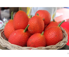 Gac Fruit Momordica Cochinchinensis