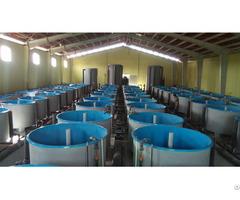 Ras Fish Farm