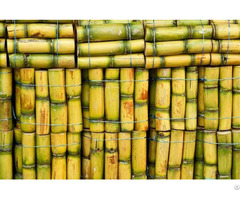 Fresh Frozen Sugarcane