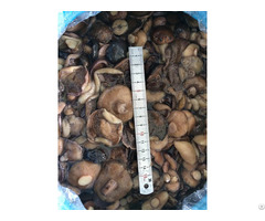 Armillaria Wild Mushrooms In Brine With Good Qulity