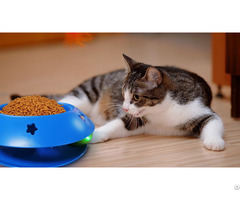 Rolling Ball Cat Bowl