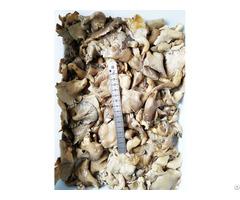 Pleurotus Ostreatus In Brine