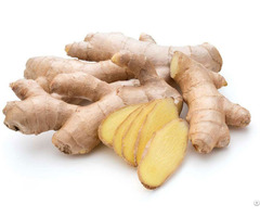 Ginger Extract Granules