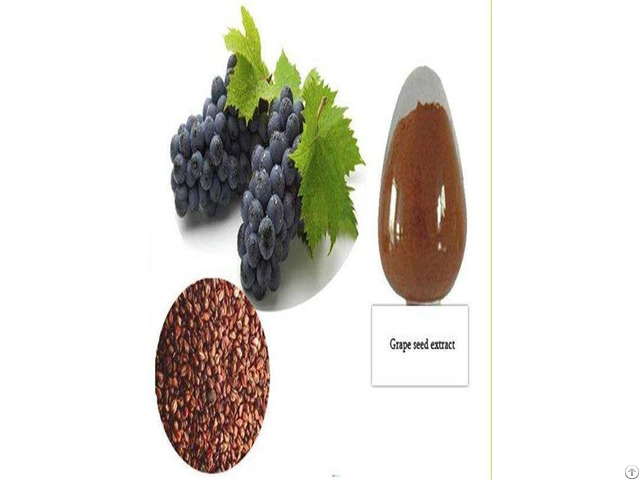Catalogue Grape Seed Extract