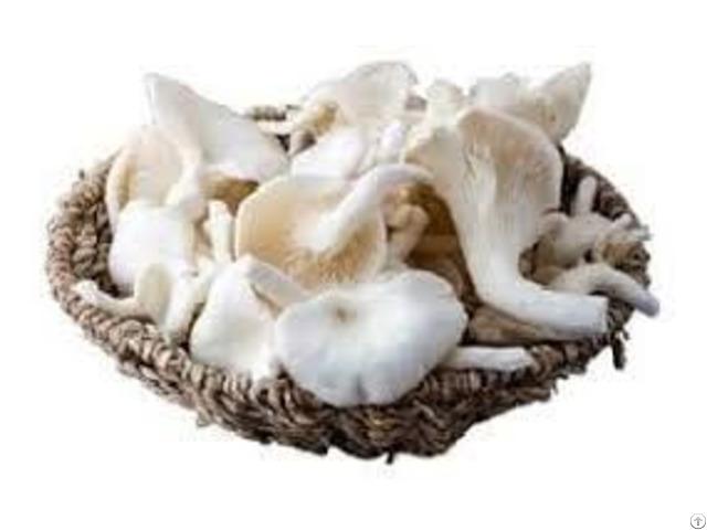 Fresh Oyster Mushroom Vdelta Sellers