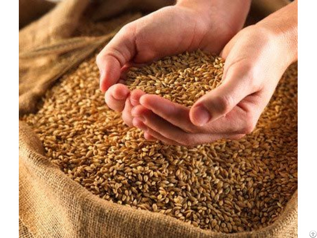 Birdseed Grain