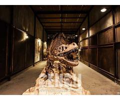 T Rex Dinosaur Fossil Fp 270