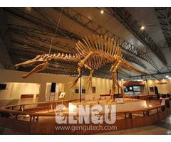 Spinosaurus Fossil Fp 269